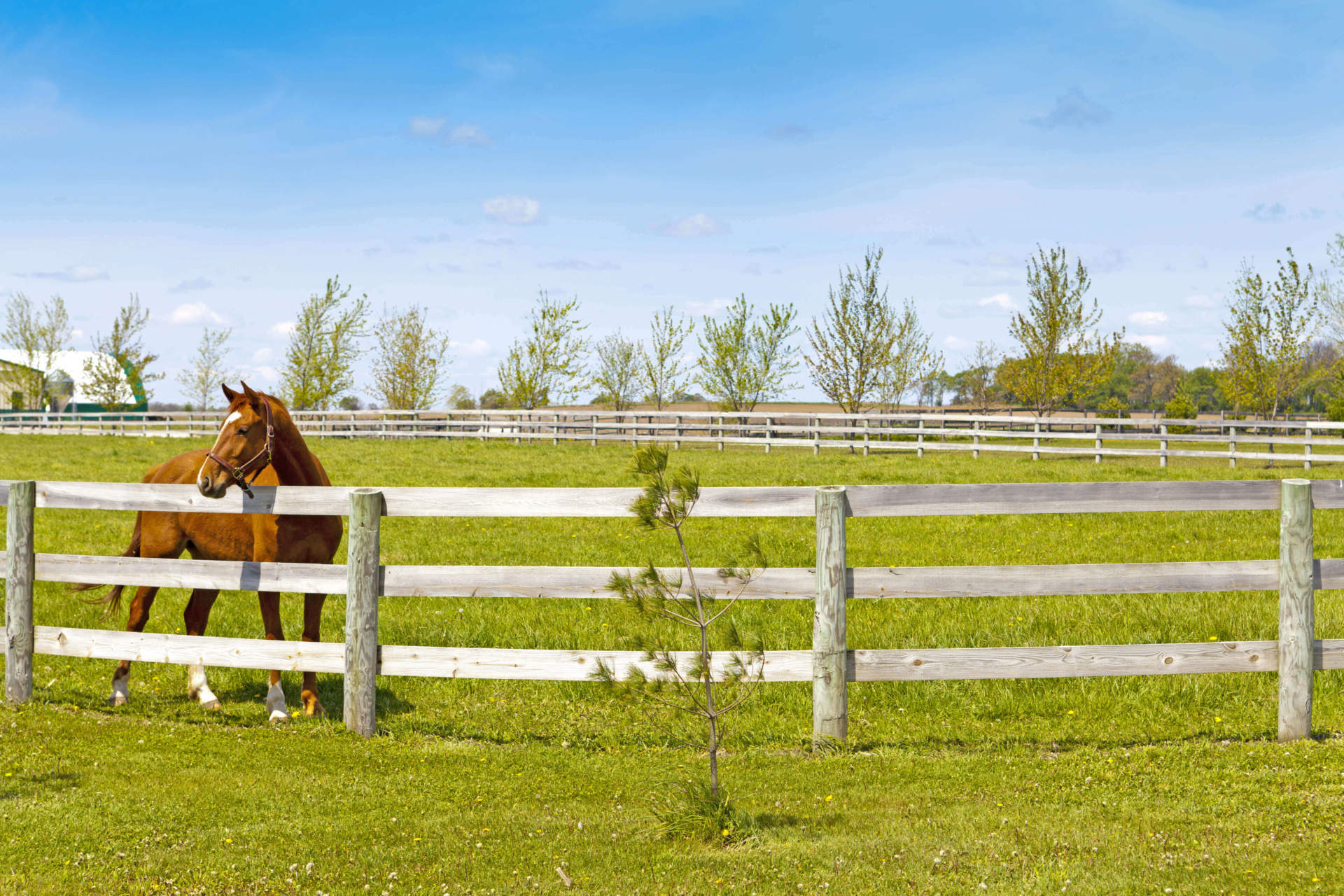 On The Fence Tips For Choosing Horse Fencing