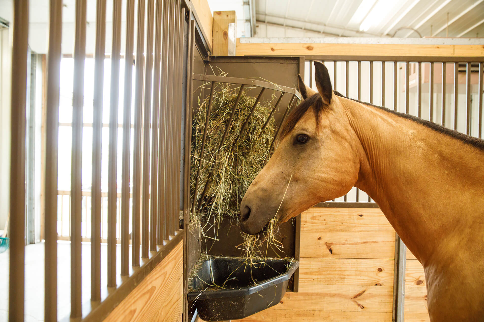 horse eating hay in stall