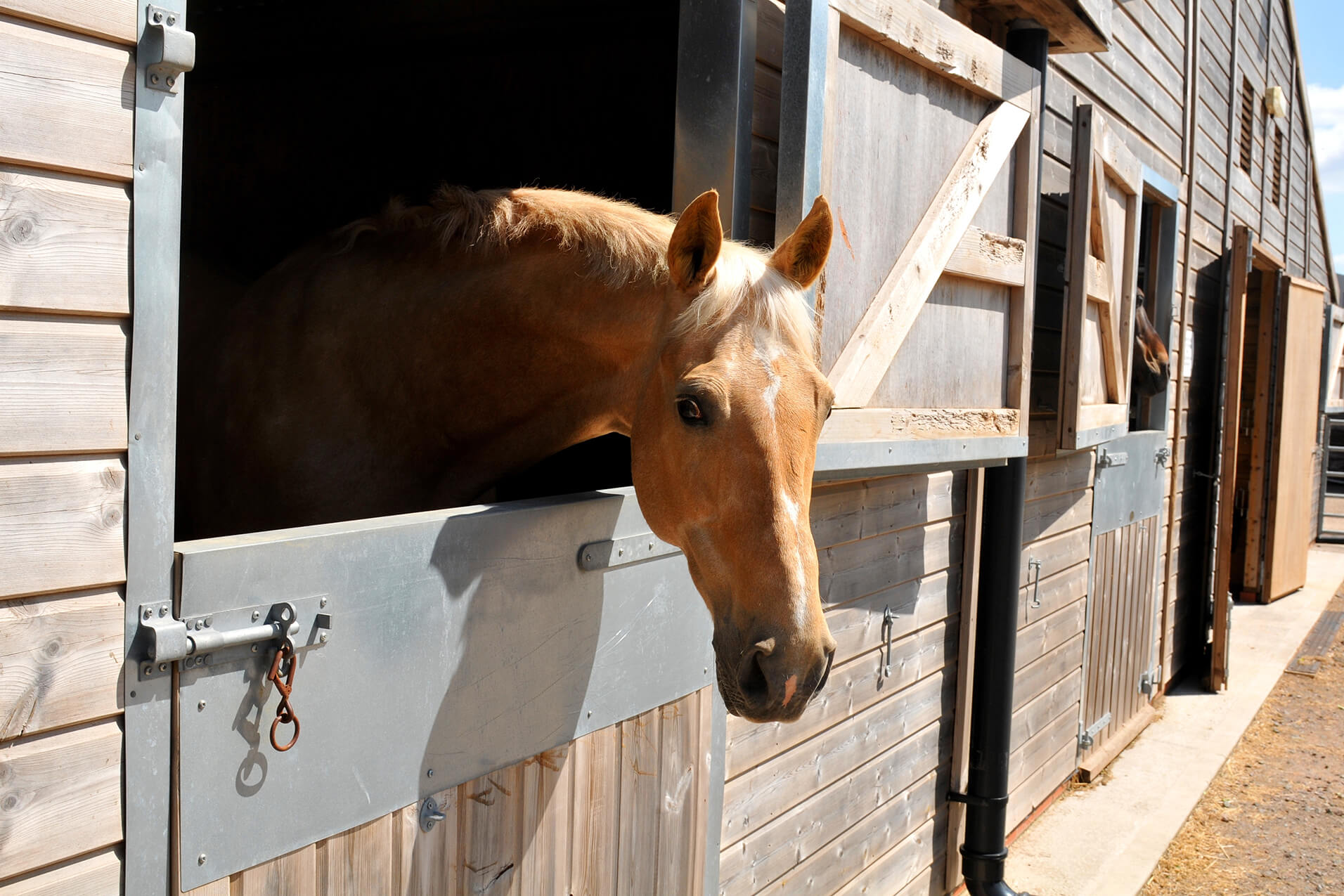 Tips for Making Your Horse's Stall Safe