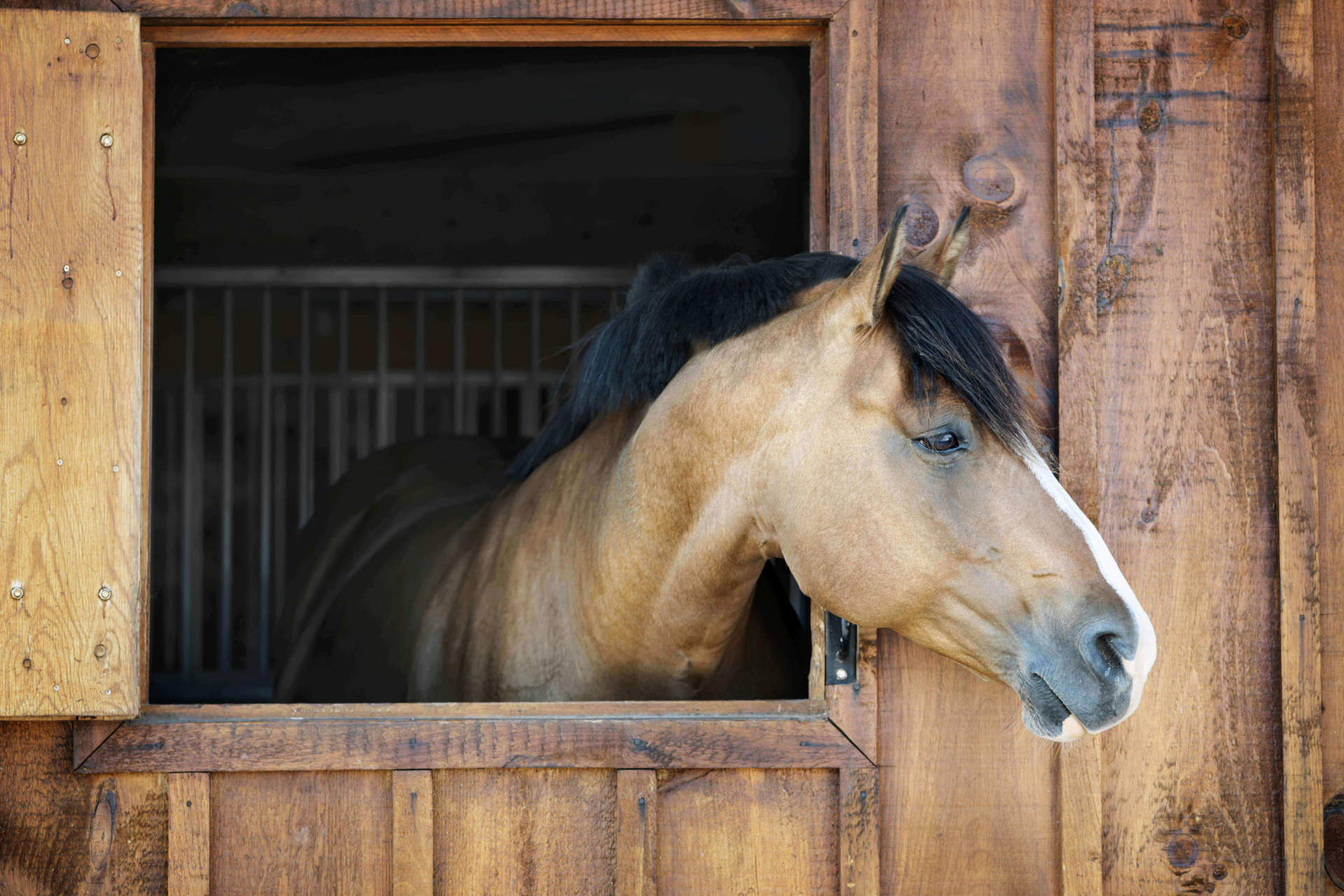Horse sticking head out of barn window