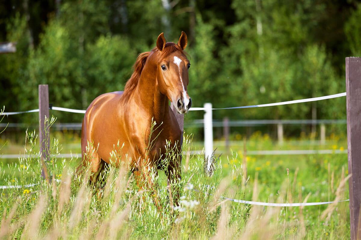 The Horse's Heart: Things You Should Know About Your Horse's Heart