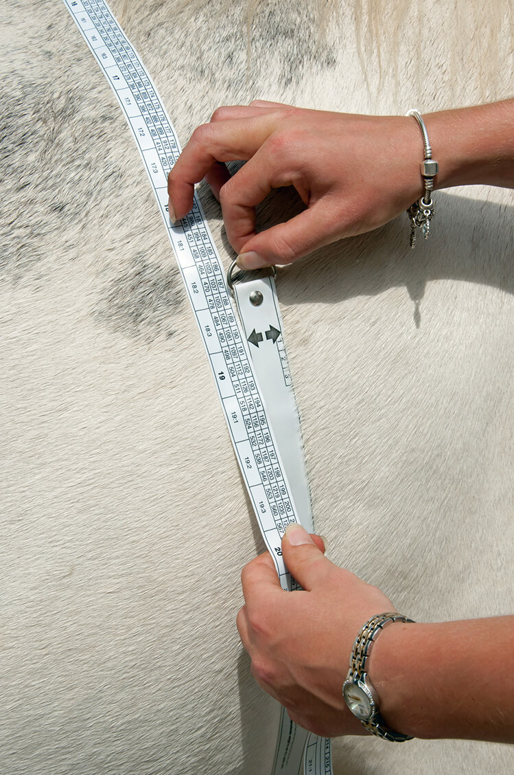 woman measuring horses weight with weight tape