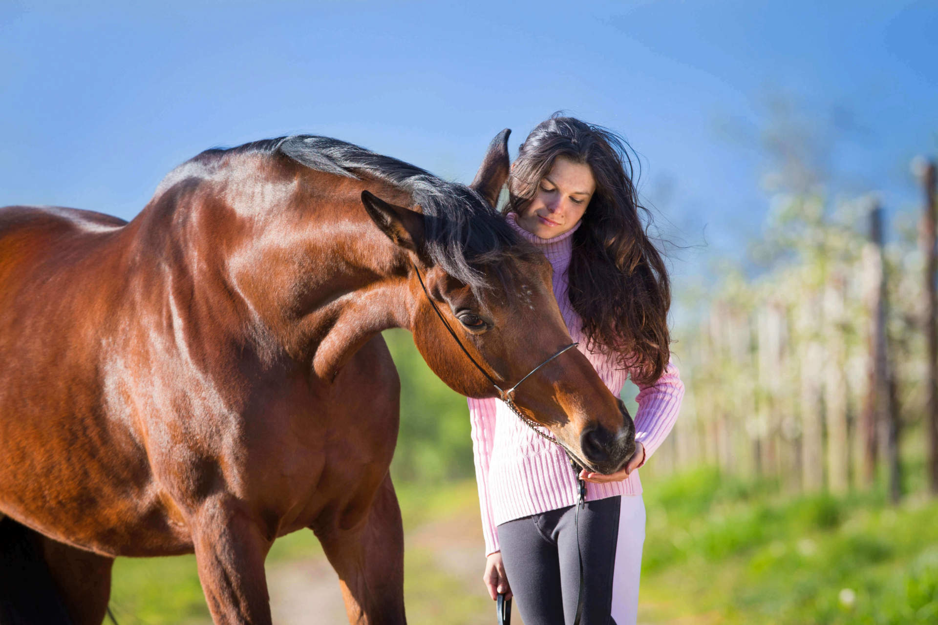 """Treating"" Your Horse Right:  Sweet Treat Recipes & Tips"