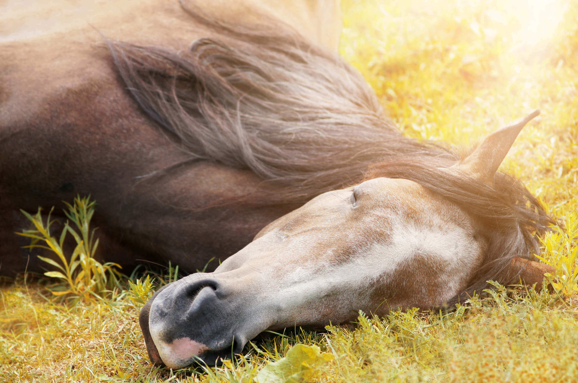 Horse laying in the sun