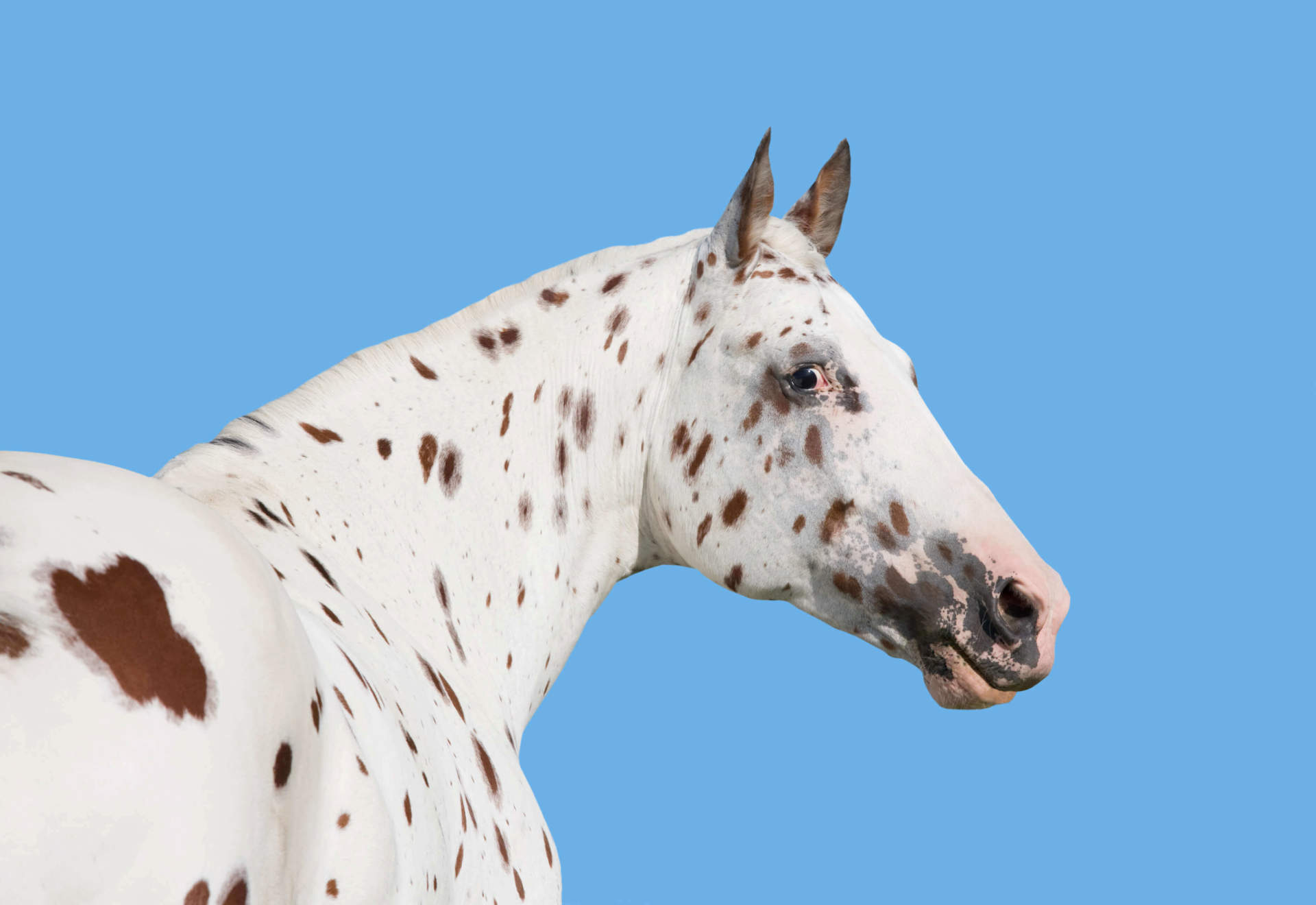 Horse with Low Pigmentation