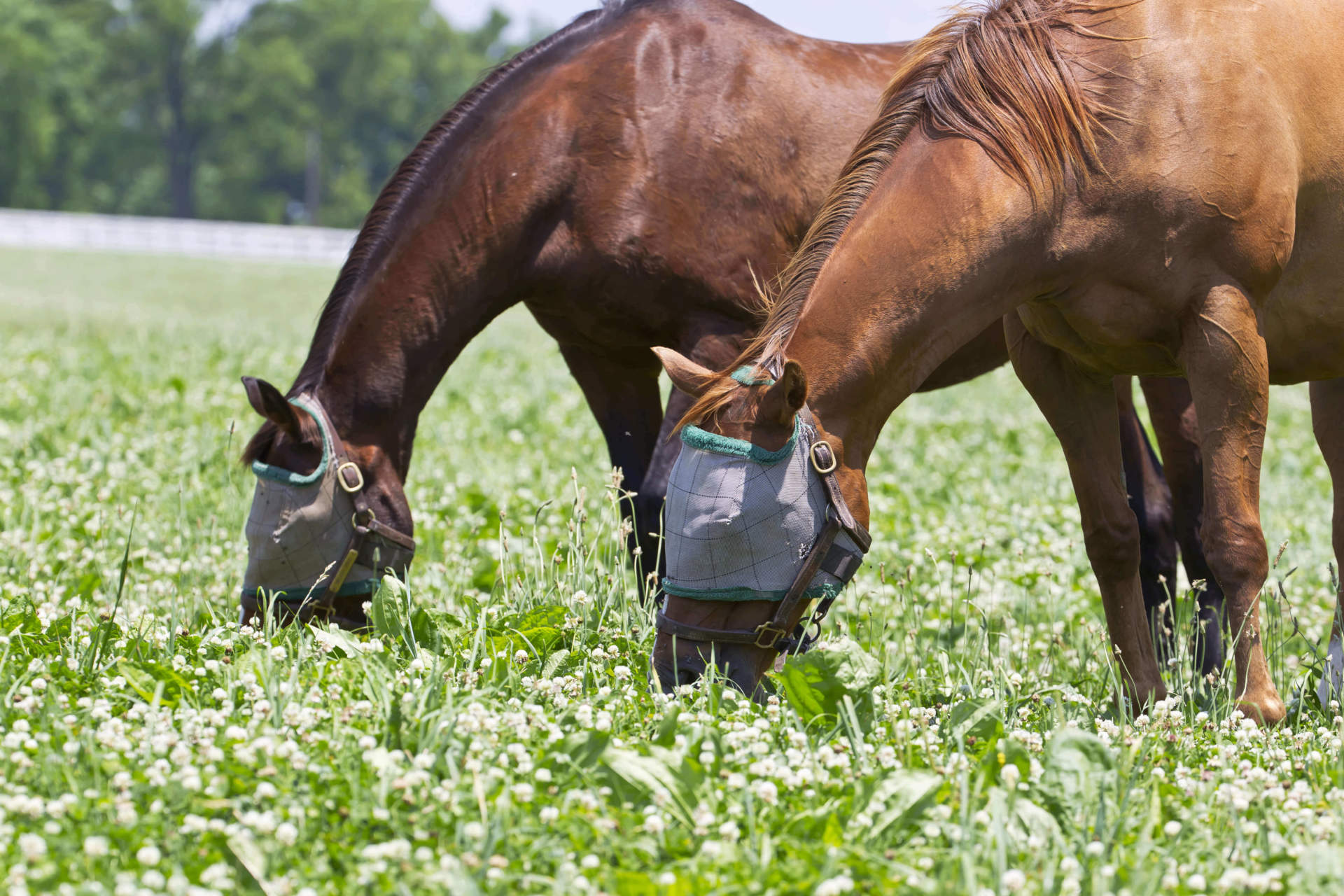 Horse fly mask
