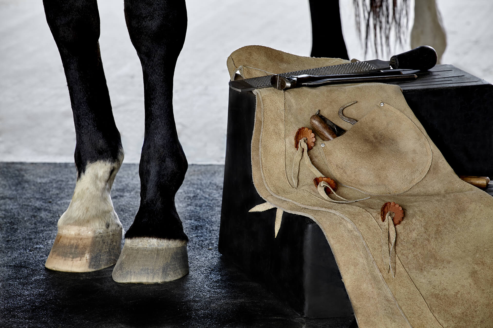 horse hooves and farrier items