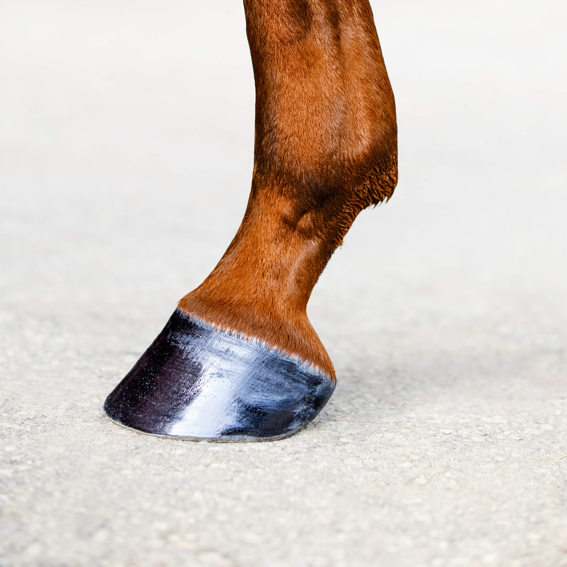 Hoof Anatomy: What Horse Hooves are Made of