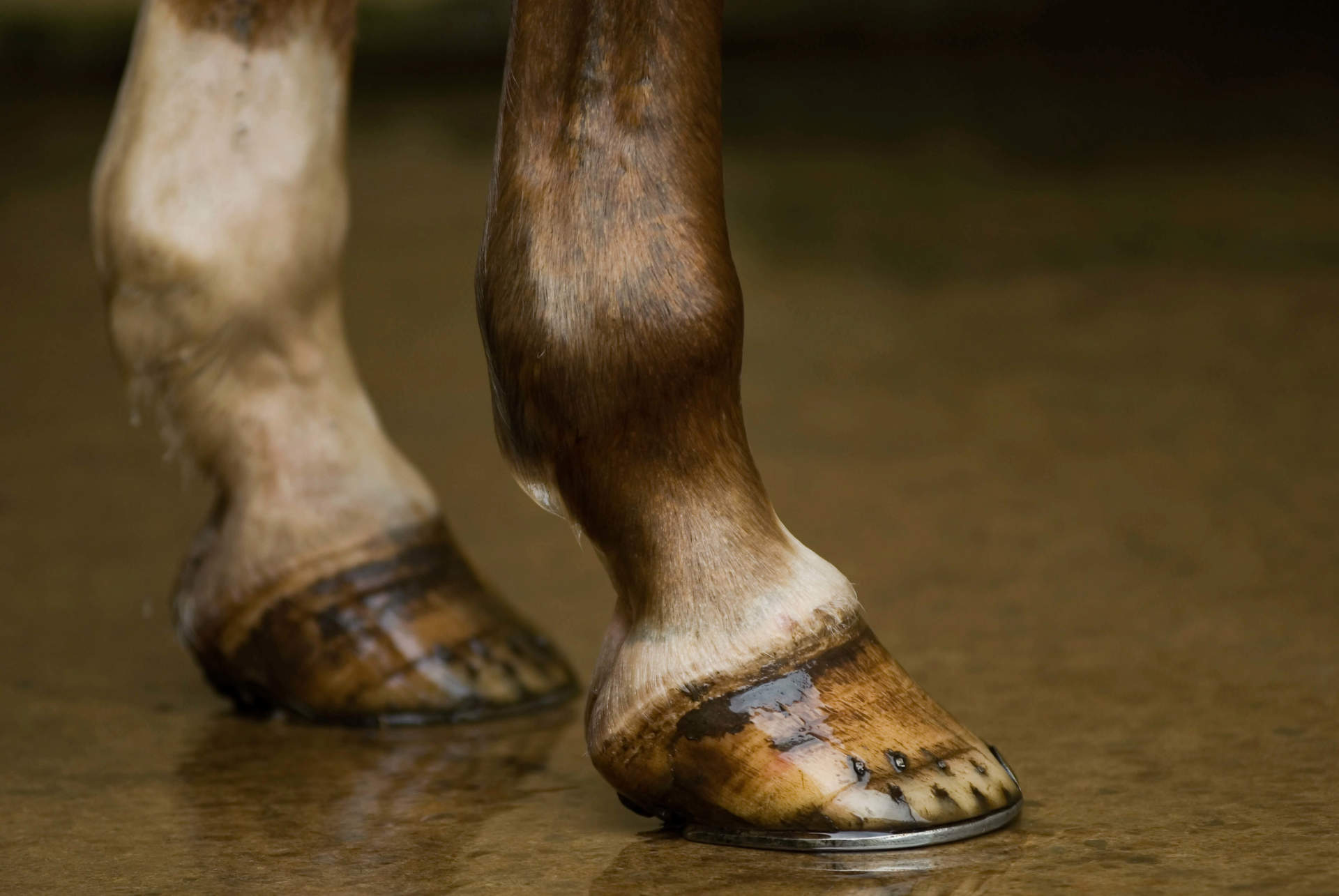 Hoof Care, Inside and Out