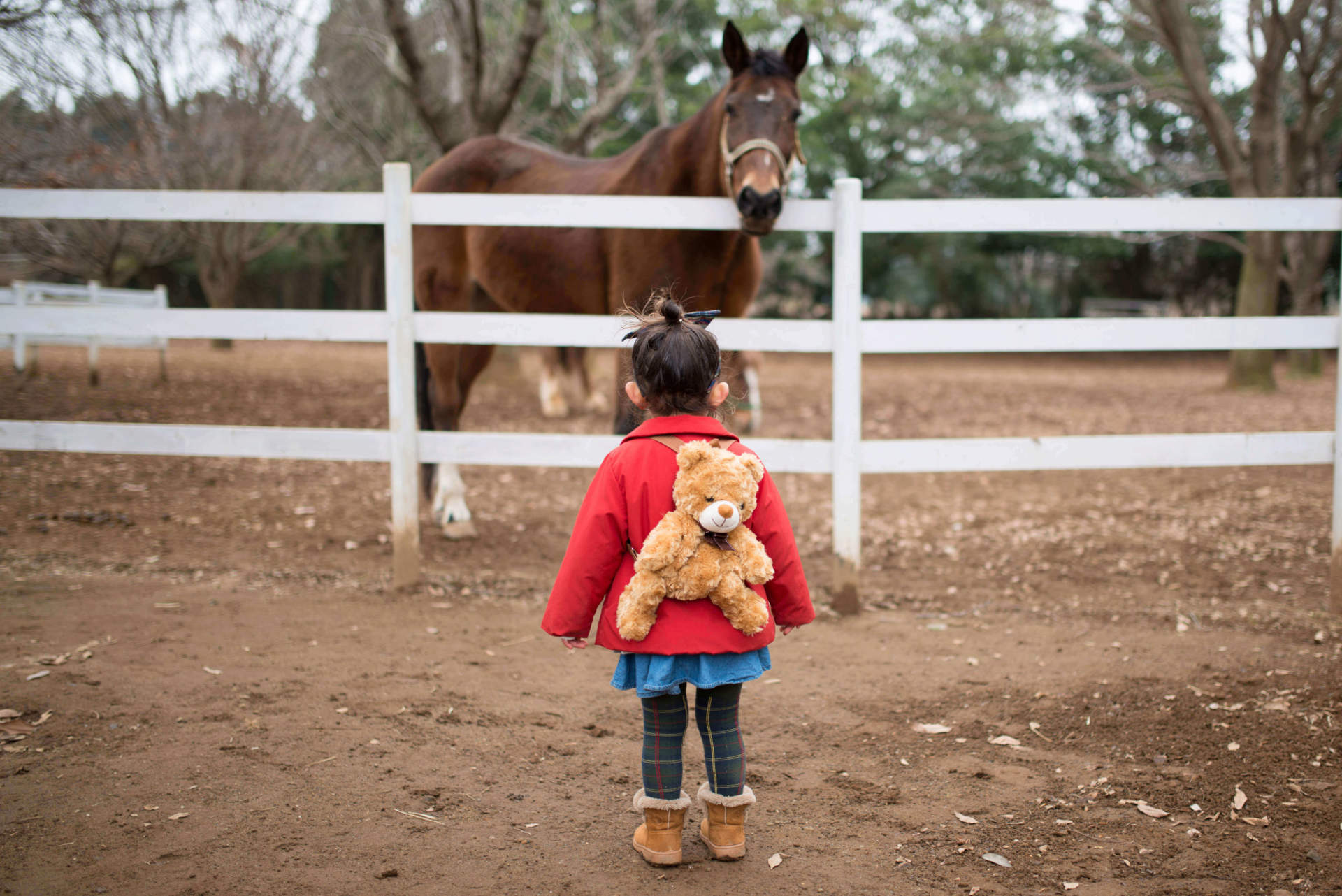 Little girl looking at a horse