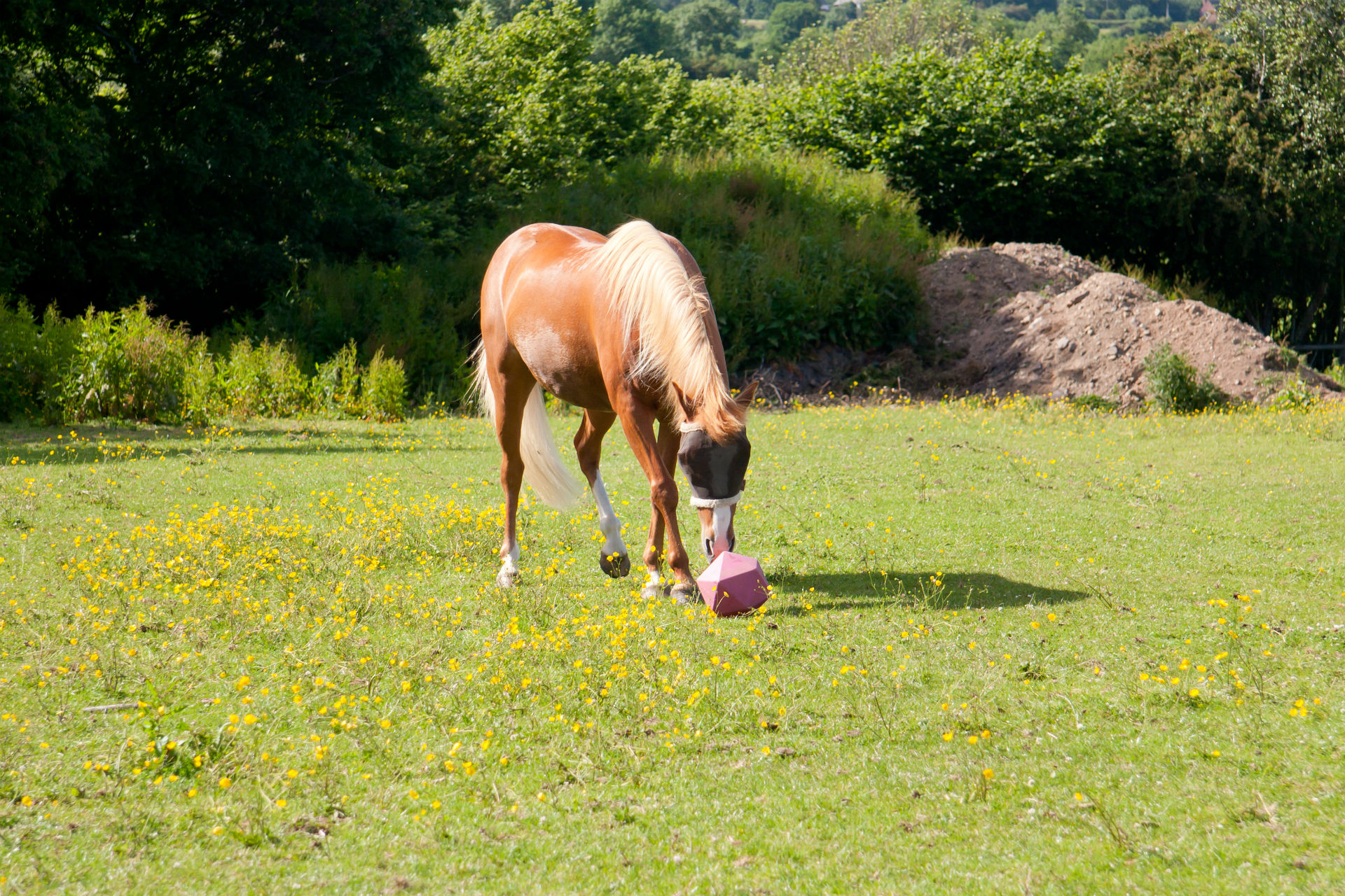 horse playing in pasture
