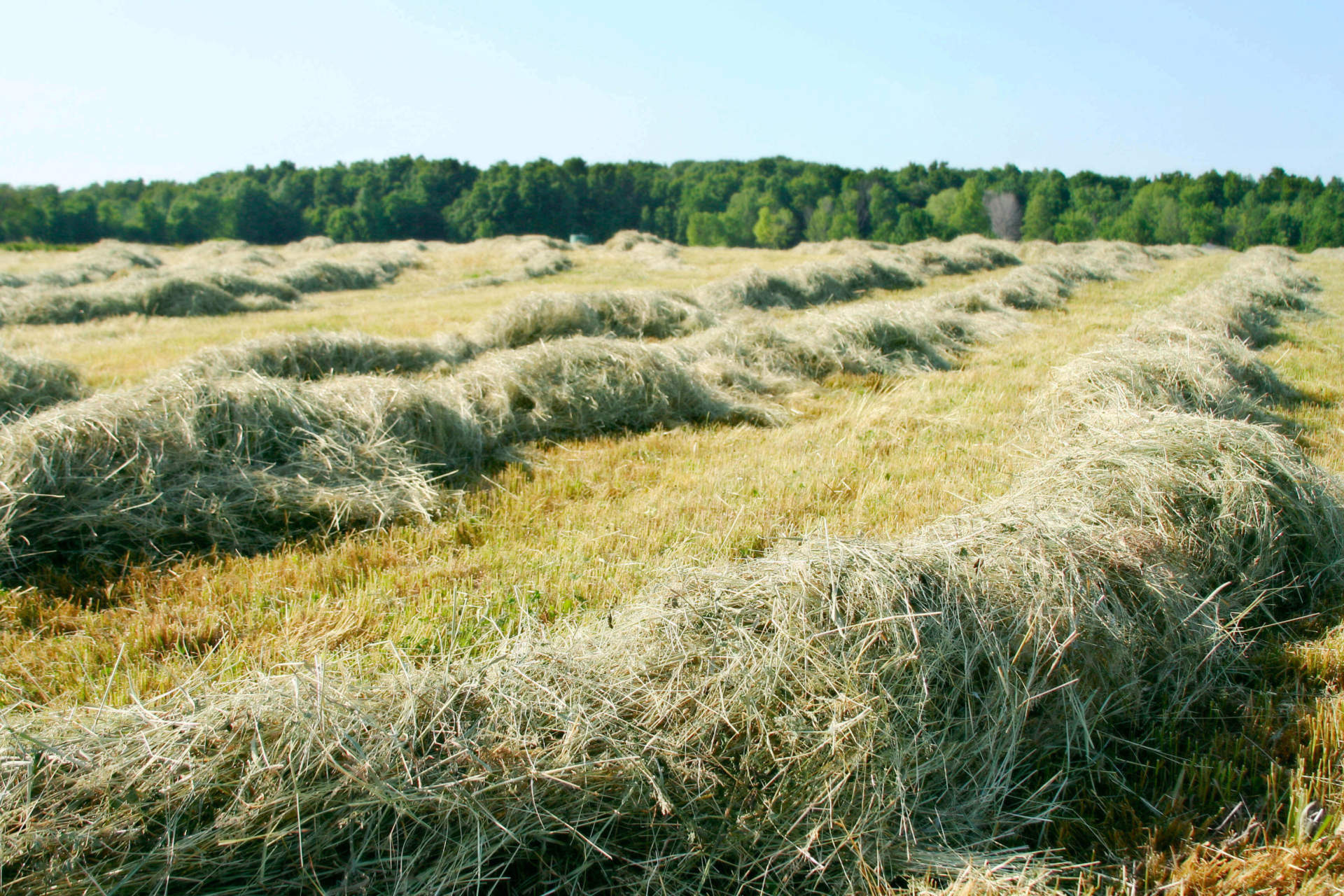 Assessing Hay Quality