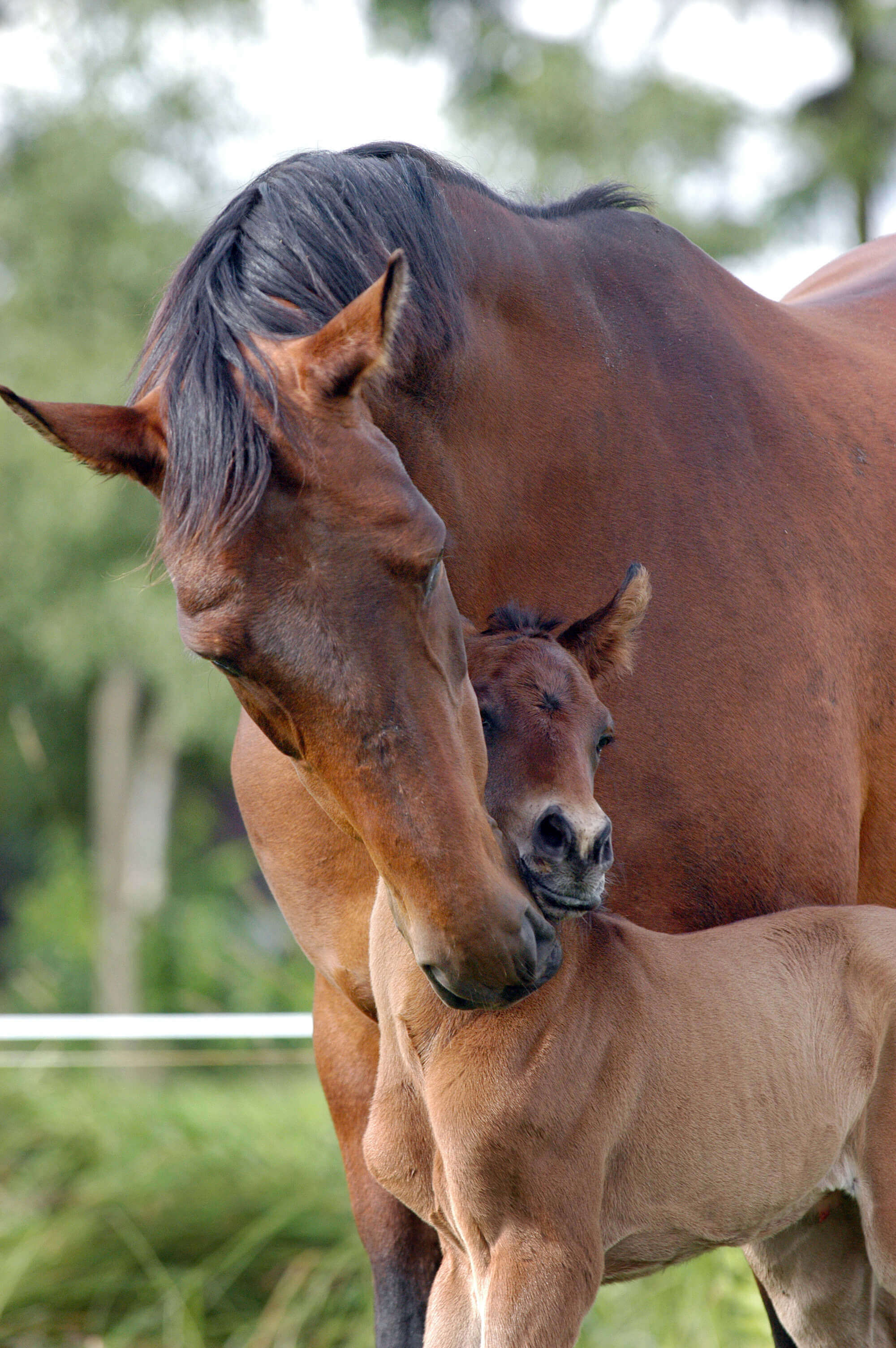 Adult Horse with young horse