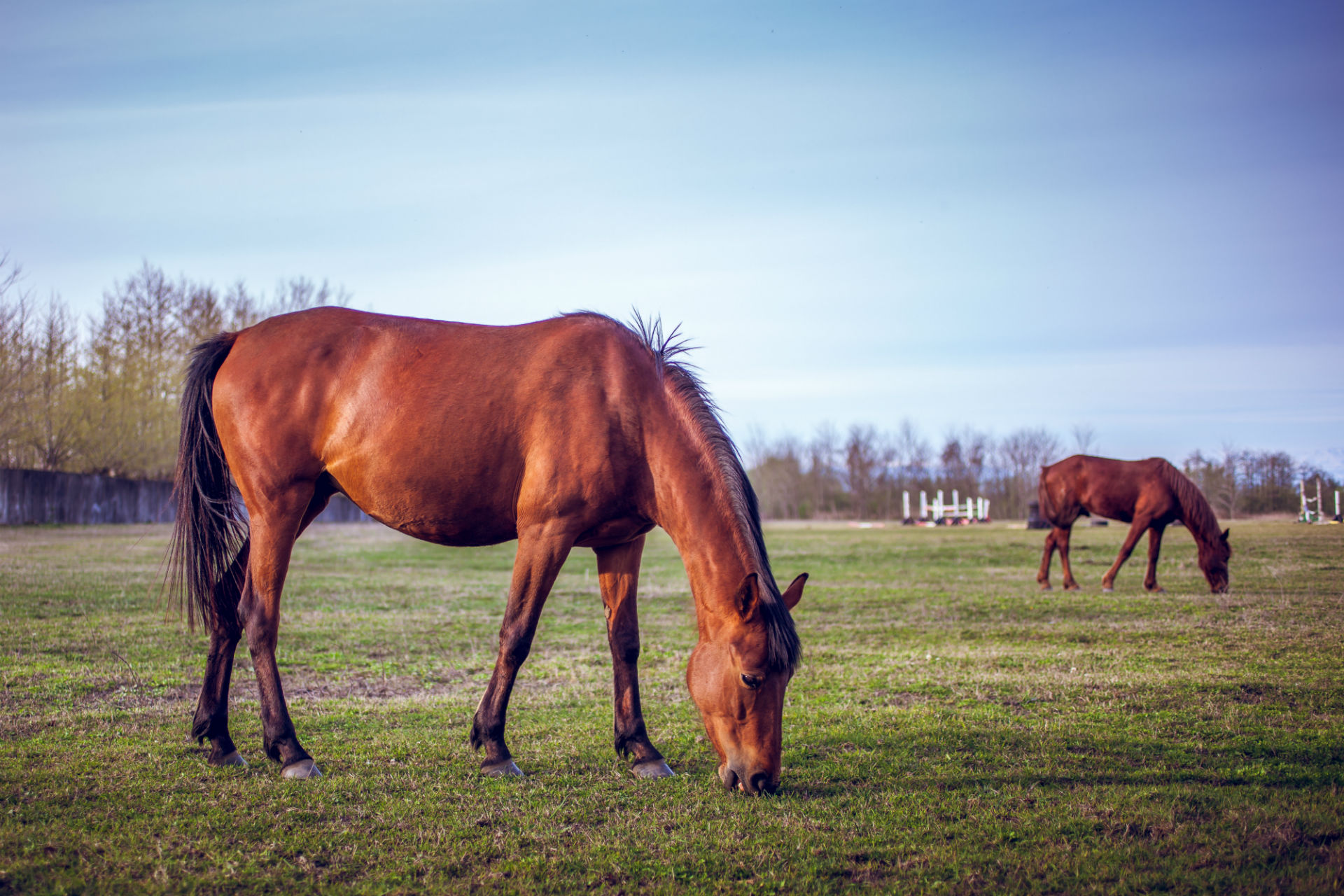 brown horse grazing in pasture