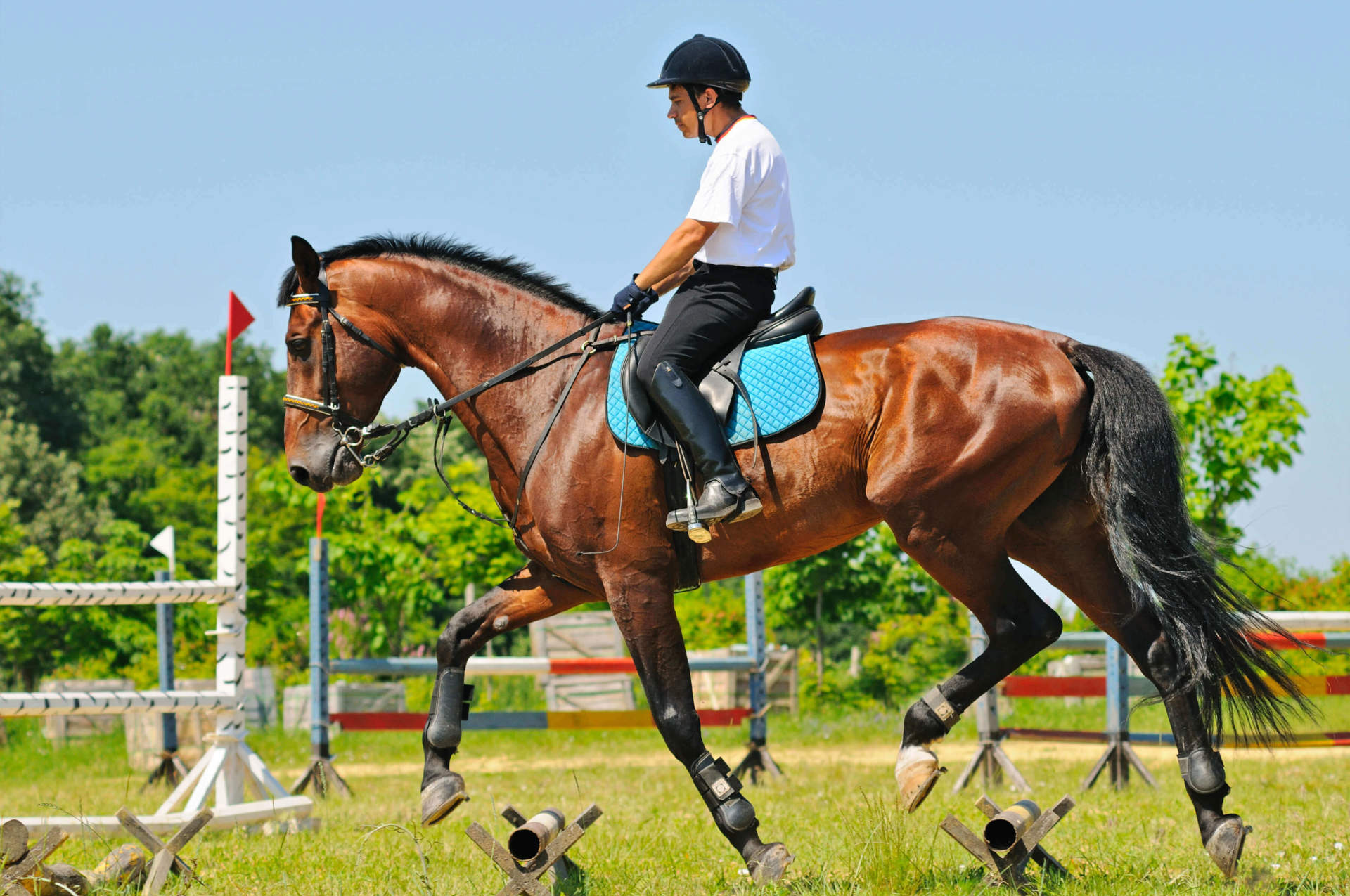Benefits of Cross-Training Your Horse