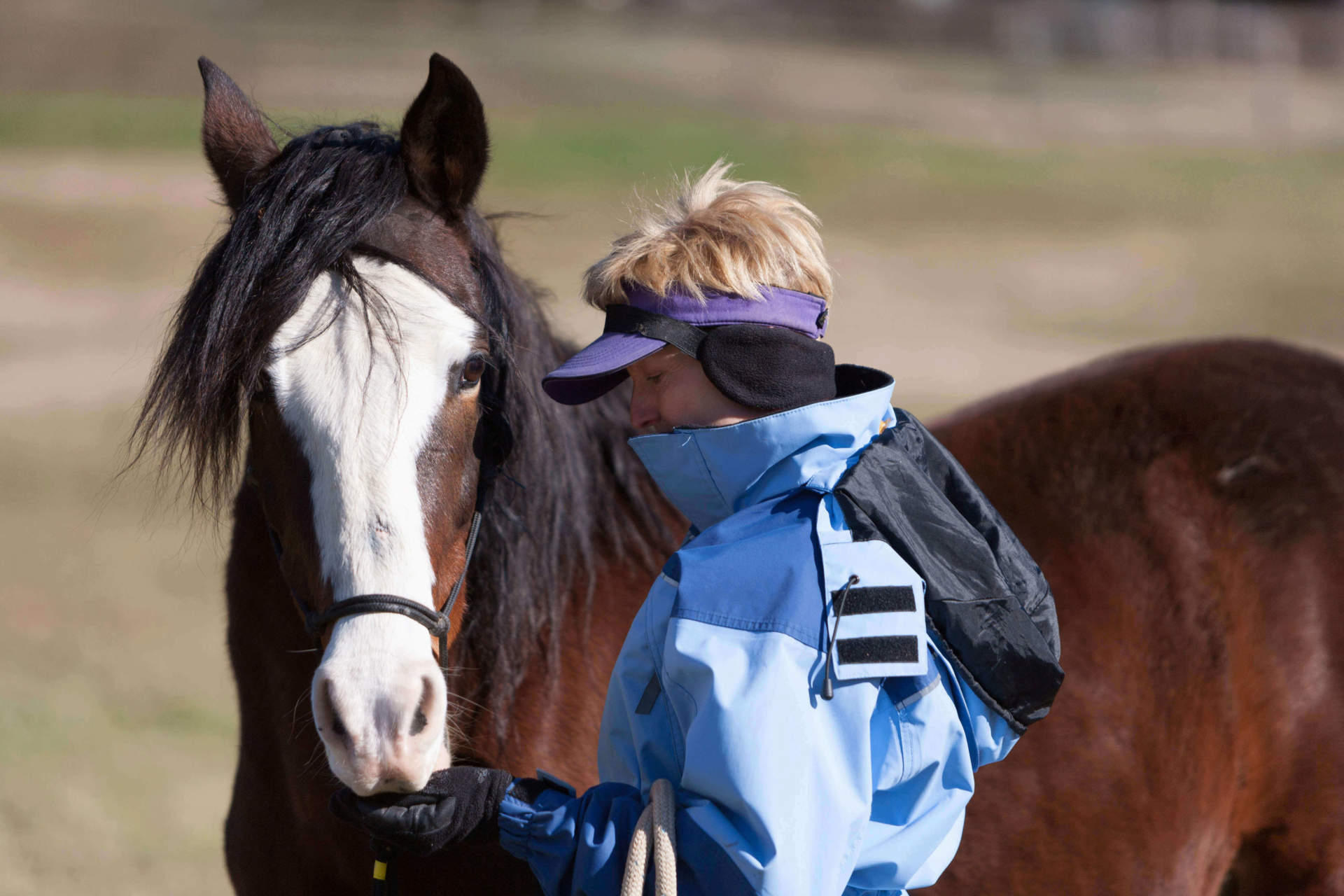 """Click"" with your Horse: The Basics on Clicker Training"