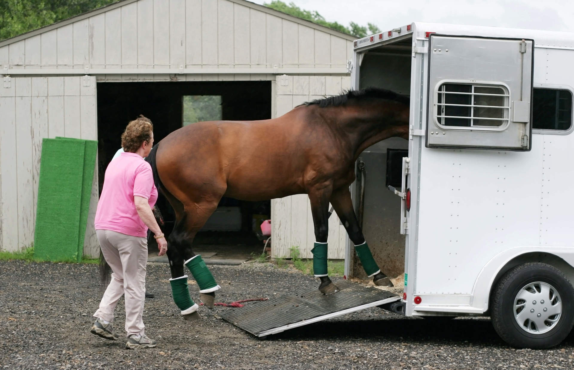 Horse getting into a Trailer