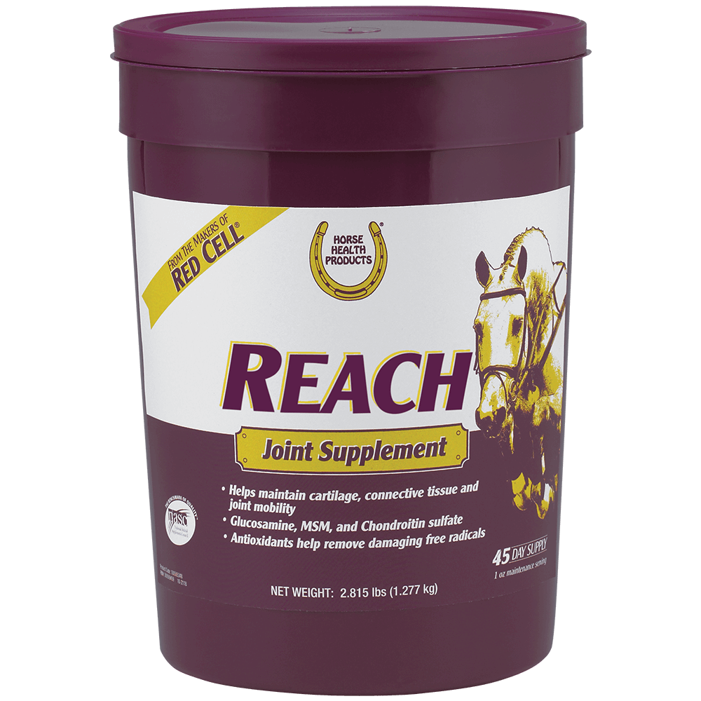 Best Joint Supplements for Horses