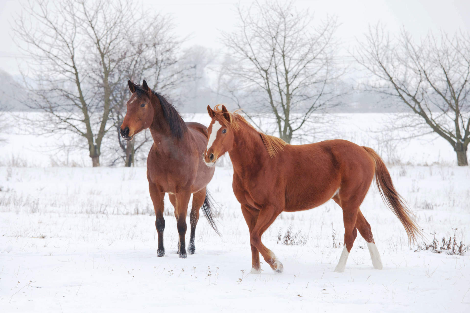 Blanketing - Don't Let Your Horse Be Left Out in the Cold