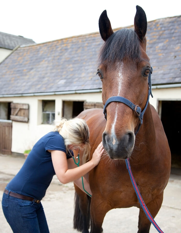 woman checking horse heartbeat