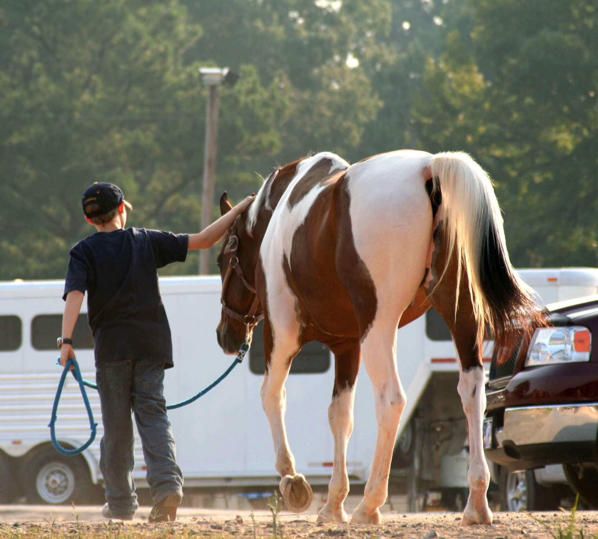 Rehabilitating the Injured Horse